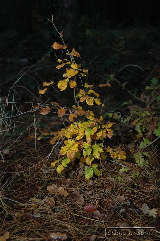 20081108_autumn walk_0034