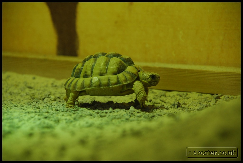 20100405_marwell-zoo_0094