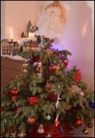 2011-12-07-tree_0026