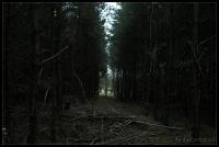 Bos wandeling_2006-10-21_16-47-05