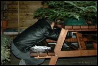 Kerstboom_2006-12-16_16-48-49