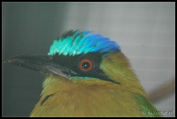 Avifauna 2007-01-07_15-41-25