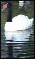 Avifauna 2007-01-07_16-12-41