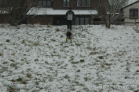 2009-02-02-Snow_0008