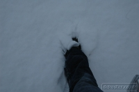 2009-02-04-snow-again_0003