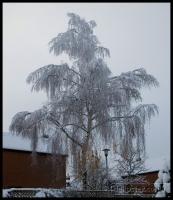 20091222_more-snow_0017
