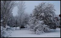 20091222_more-snow_0025