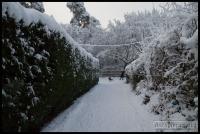 20091222_more-snow_0057