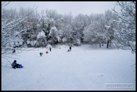 20091222_more-snow_0149