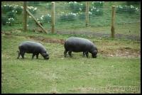 20100405_marwell-zoo_0025