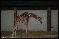 20100405_marwell-zoo_0059