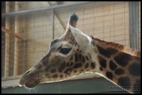 20100405_marwell-zoo_0076