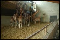 20100405_marwell-zoo_0079