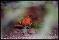 20100405_marwell-zoo_0099