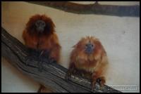 20100405_marwell-zoo_0186