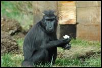 20100405_marwell-zoo_0191