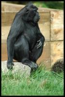20100405_marwell-zoo_0204