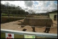 20100405_marwell-zoo_0219