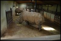 20100405_marwell-zoo_0233