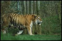 20100405_marwell-zoo_0260