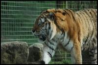 20100405_marwell-zoo_0278