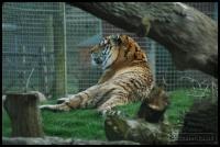 20100405_marwell-zoo_0288