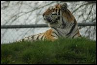 20100405_marwell-zoo_0295