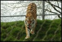 20100405_marwell-zoo_0303