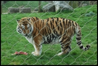 20100405_marwell-zoo_0314