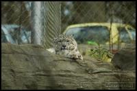 20100405_marwell-zoo_0333
