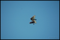 20100417_flying-with-paul_0234