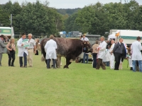 berkshire-county-show_20120916_0080
