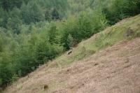 2011-04-25 Camping Wales_0043