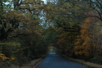 20081108_autumn walk_0039