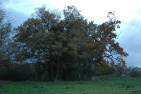20081108_autumn walk_0045