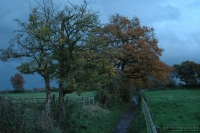20081108_autumn walk_0046
