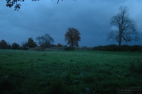 20081108_autumn walk_0050