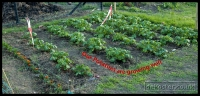 20090523_allotment-update_0001