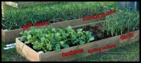 20090523_allotment-update_0008