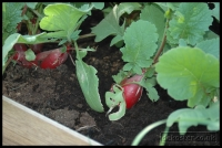 20090523_allotment-update_0010