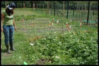20090621_allotment_0003