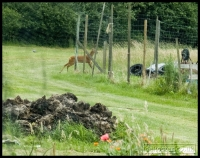 20090621_allotment_0004