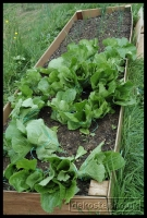 20090621_allotment_0011