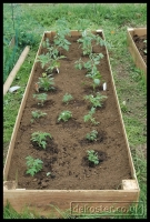 20090621_allotment_0014