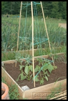 20090621_allotment_0033