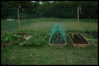 20090621_allotment_0035