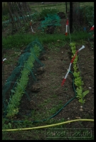 20090621_allotment_0038