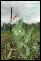 20090621_allotment_0040