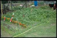 20090621_allotment_0042